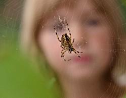 Укусы пауков и скорпионов