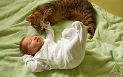 Грудной ребенок и кот на постели