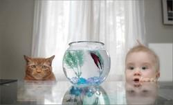 Ребенок, рыбкав аквариуме и кот